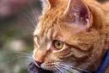 Hygiene und Desinfektion bei Katzen