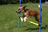 Stallreinigung Hunde