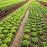 Fungizide Gemüsebau in verschiedenen Kulturen gegen Pilze