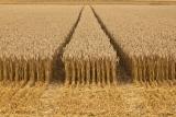 Fungizide im Ackerbau und Landwirtschaft
