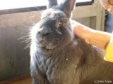 Stallhygiene bei Kaninchen und Hasen