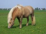 Stallhygiene bei Pferden