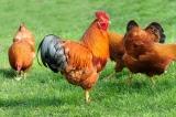 Hygiene in der Tierhaltung Stalldesinfektion