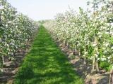 Unkrautvernichter im Obstbau im Getreide für die Landwirtschaft