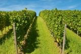 Unkrautvernichter für den Weinbau