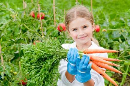 Insektizide Gemüseanbau
