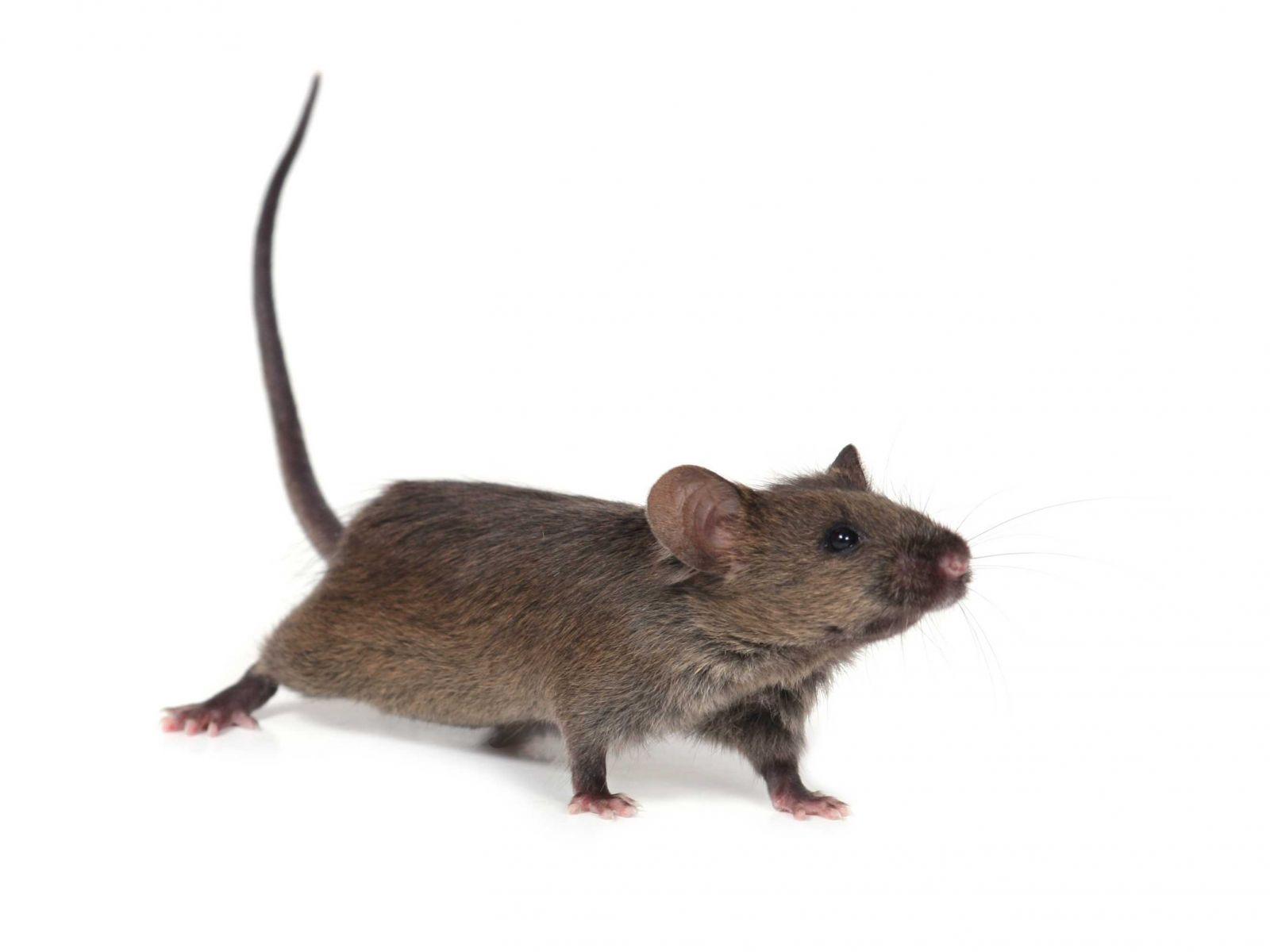 Rattenbekampfung Unkrautvernichter Shop De